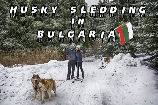 bulgaria husky sledding