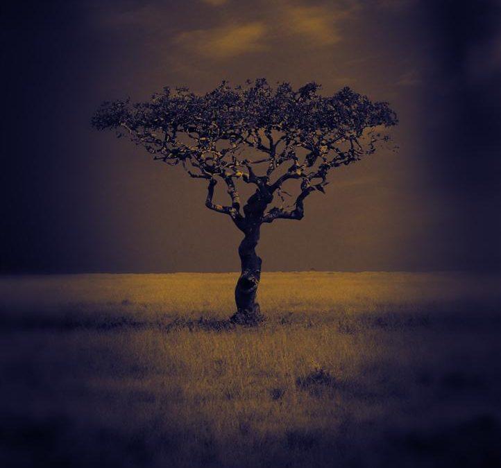 Serengeti report!