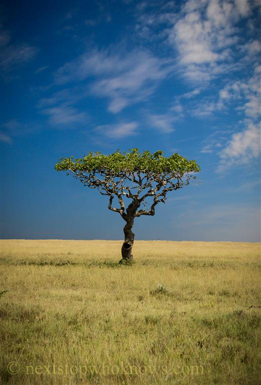 Serengeti Trees (PHOTO)