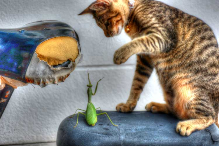 [Travel Photo] – Cat Vs Mantis