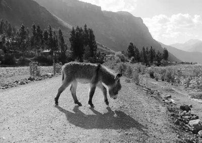 Machu Picchu Trek, Peru