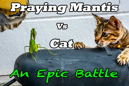Praying Mantis Vs Cat – An Epic Battle