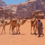 wadi rum desert camels